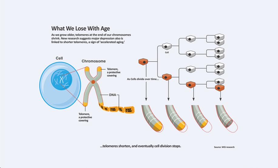 telomeres telomerase supplements bill andrews anti aging supplements